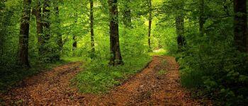 Balade sensorielle en forêt Vouvant