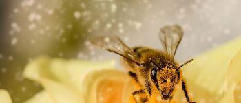 Initiation au suivi photographique des insectes pollinisateurs Vouvant