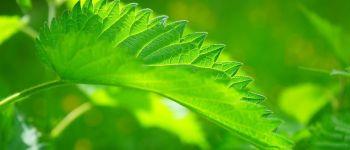 Sortie plantes sauvages comestibles Vouvant