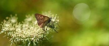 Le petit papillon dans la prairie Saint-Colomban