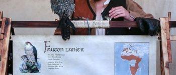 Saveurs en volées, tout l'art de la fauconnerie Saint-Mesmin