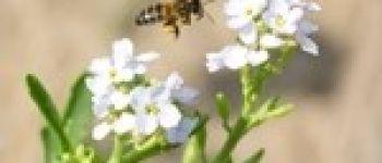 À la découverte des abeilles sauvages Pornic
