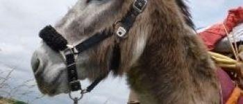 Yog'âne : randonnée avec ânes et yoga Guenrouet
