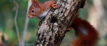 Sortie nature : l'automne avec Feuille l'écureuil Aizenay