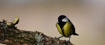 Sortie nature : oiseau qui es-tu ? Les Landes-Genusson
