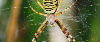 Sortie nature : araignées et autres bêtes qui font peur (ou pas !) Les Landes-Genusson