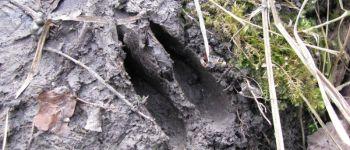 Sortie nature : sur les traces des mammifères de la Réserve Nalliers