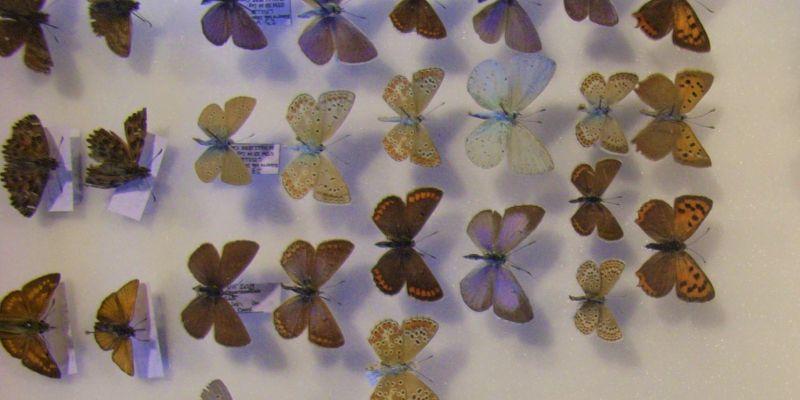 La fête de la science à la réserve - « collections naturalistes : inventaires de biodiversité ! »