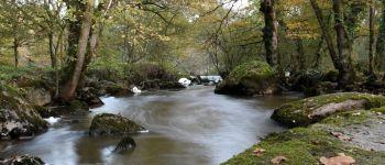 Sortie nature : A la découverte des bois de la Barbinière Saint-Laurent-sur-Sèvre