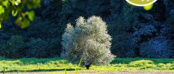 Jaunay\Scapdes, sortie ludique : Les arbres contés et bricolés La Chapelle-Hermier