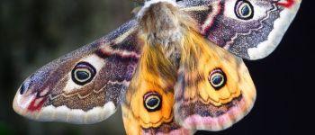 Papillons de nuit. Champagné-les-Marais