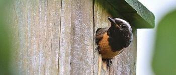 Oiseaux migrateurs à la ferme. Dompierre-sur-Yon